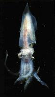 Coral. Dendrophilia.