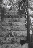 Los gatos de Jerusalén.