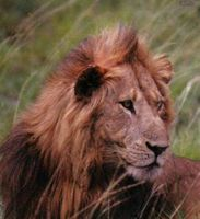 La observación de la fauna en libertad es uno de los mayores alicientes para el turismo.