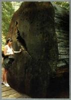"""Monumental troza de más de 3 m. de diámetro de una sequoia gigante (""""Sequoiadendron gigantea"""") milenaria del conjunto """"Calavera Groves"""", del parque californiano de San Estanislao. (Foto: J.A. Pardos)."""