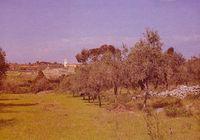 La vegetación del lugar, clave del tratamiento de los alrededores urbanos en núcleos históricos. Coimbra (Foto J. A. Abella).