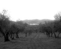 Vista de Guadalcanal entre los olivos