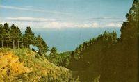 Bosques y viñedos registran  anualmente millones de toneladas de resíduos.