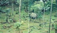 La tala del bosque en favor de la agricultura.