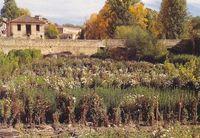 Los usos tradicionales del suelo dan carácter y peculiaridad al paisaje.